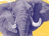 Drawing of an Elephant