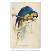 The Remarkable Nature of Edward Lear