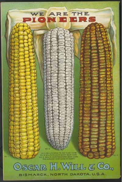 maize 4
